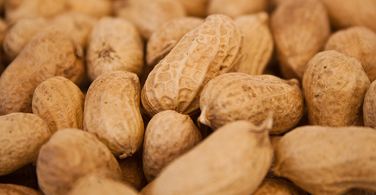 PEANUT ALLERGY ALERT
